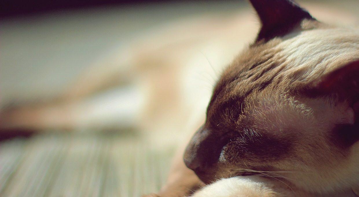 Животные видят сны? ПРОСОН.ИНФО фото