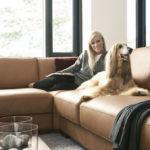 как выбрать кожаный диван просон инфо