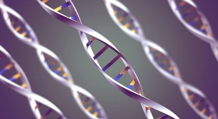 ген короткого сна просон инфо